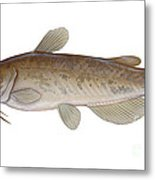 Illustration Of A Brown Bullhead Metal Print by Carlyn Iverson