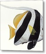 Illustration Of A Pennant Coralfish Metal Print by Carlyn Iverson