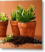 Indoor Plant Metal Print by Boon Mee