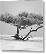 Infrared Photo Of Pine In Winter Landscape In The Nature Dwingelderveld In The Netherlands Metal Print by Ronald Jansen