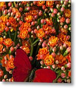Kalanchoe Plant With Butterfly Metal Print by Garry Gay
