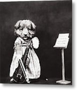 Little Fiddler Metal Print by Aged Pixel