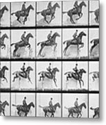 Man And Horse Jumping A Fence Metal Print by Eadweard Muybridge