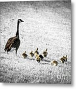 Mother Goose Metal Print by Elena Elisseeva