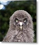 owl Metal Print by Fizzy Image