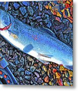 Rainbow Trout Dry Fly Reel Poster Image Metal Print by A Gurmankin