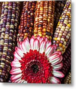 Red And White Mum With Indian Corn Metal Print by Garry Gay