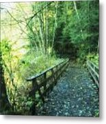 Rice Lake In North Vancouver Metal Print by Marlene Ford