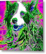 Sheep Dog 20130125v2 Metal Print by Wingsdomain Art and Photography