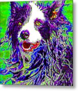 Sheep Dog 20130125v4 Metal Print by Wingsdomain Art and Photography