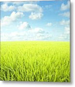 Sky Greens Landscape Metal Print by Boon Mee