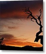 Southwest Tree Sunset Metal Print by Michael J Bauer
