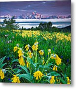 Teton Spring Wildflowers Metal Print by Jerry Patterson