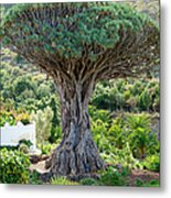 The Dragon Tree / El Drago Milenario Metal Print by Gavin Lewis