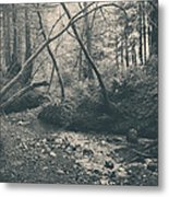 Through The Woods Metal Print by Laurie Search