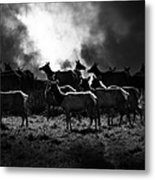Tomales Bay Harem Under The Midnight Moon - 7d21241 - Black And White Metal Print by Wingsdomain Art and Photography