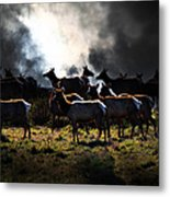 Tomales Bay Harem Under The Midnight Moon - 7d21241 Metal Print by Wingsdomain Art and Photography