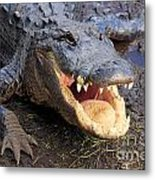 Toothy Grin Metal Print by Adam Jewell