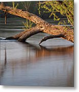 Tree Wash Metal Print by Theo O Connor