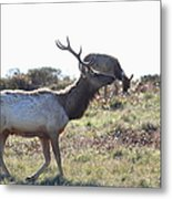 Tules Elks Of Tomales Bay California - 7d21199 Metal Print by Wingsdomain Art and Photography