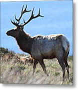 Tules Elks Of Tomales Bay California - 7d21218 Metal Print by Wingsdomain Art and Photography