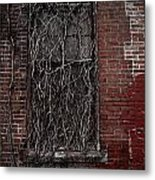 Vines Of Decay Metal Print by Amy Cicconi