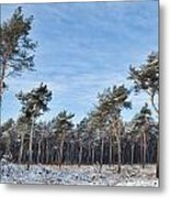 Winter Forest Covered With Snow Metal Print by Dirk Ercken