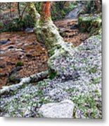 Winter In The Woods Metal Print by Adrian Evans
