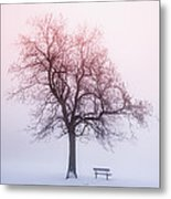 Winter Tree In Fog At Sunrise Metal Print by Elena Elisseeva