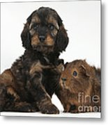 Puppy And Guinea Pig Metal Print by Mark Taylor