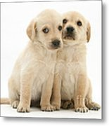 Labrador Retriever Puppies Metal Print by Jane Burton