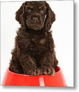 Cocker Spaniel Pup In Doggy Dish Metal Print by Mark Taylor