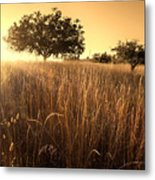 Sun-kissed California Meadow Metal Print by Matt Tilghman