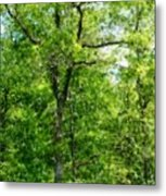 A Tree In The Woods At The Hacienda  Metal Print by David Lane