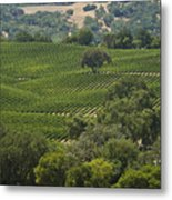 A Vineyard In The Anderson Valley Metal Print by Richard Nowitz