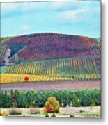 A Yamhill Co. Vineyard Metal Print by Margaret Hood