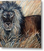 African Lion 2 Metal Print by Nick Gustafson
