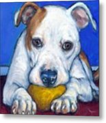 American Bulldog With Yellow Ball Metal Print by Dottie Dracos