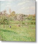 Apple Trees At Gragny Metal Print by Camille Pissarro