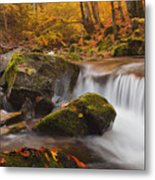 Autumn Forest Metal Print by Evgeni Dinev