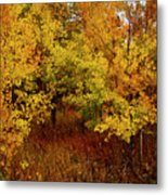 Autumn Palette Metal Print by Carol Cavalaris