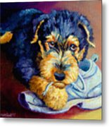 Bad Puppy Airedale Terrier Metal Print by Lyn Cook