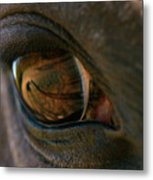 Beauty Is In The Eye Of The Beholder Metal Print by Angela Rath