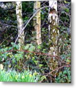 Birch Trees In London Metal Print by Mindy Newman