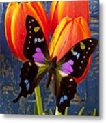 Black And Pink Butterfly Metal Print by Garry Gay