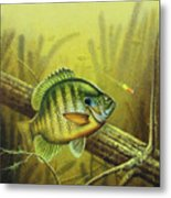 Bluegill And Jig Metal Print by JQ Licensing