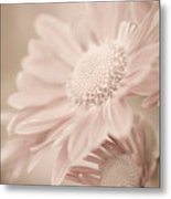 Blushing Metal Print by Julie Palencia