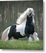 Breathtaking Stallion Metal Print by Terry Kirkland Cook