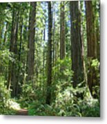 California Redwood Trees Forest Art Prints Metal Print by Baslee Troutman