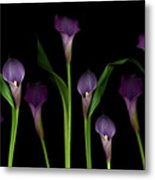 Calla Lilies Metal Print by Marlene Ford